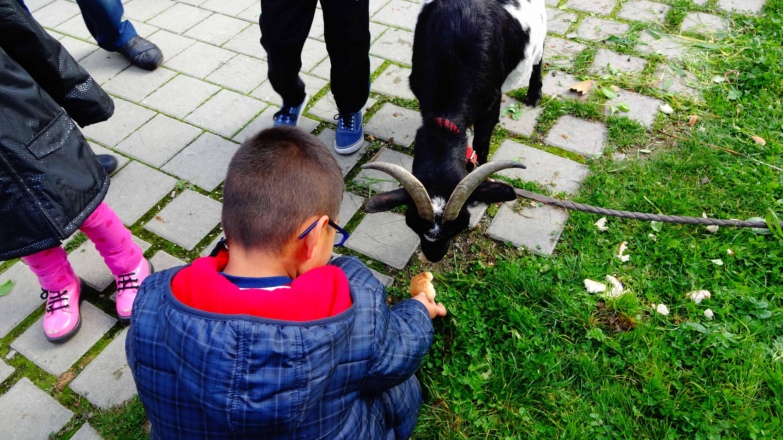 enfant-chèvre BQ