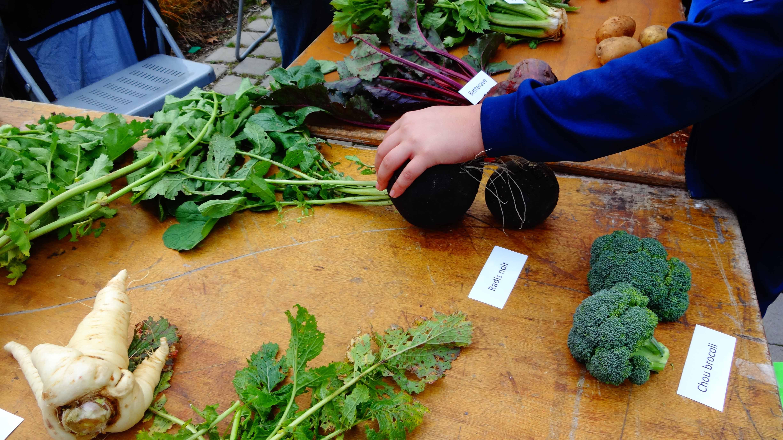 quiz-légumes BQ
